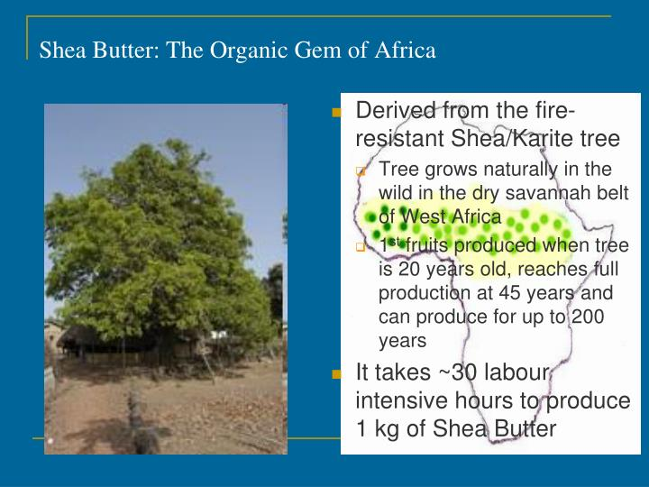 Shea Butter: The Organic Gem of Africa