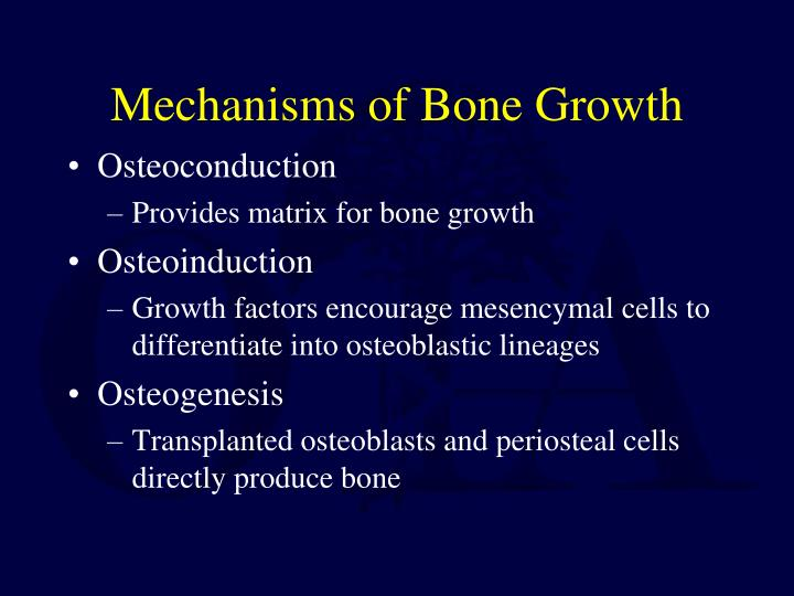 Mechanisms of bone growth