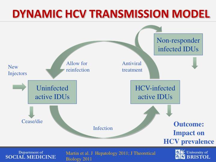 DYNAMIC HCV TRANSMISSION MODEL
