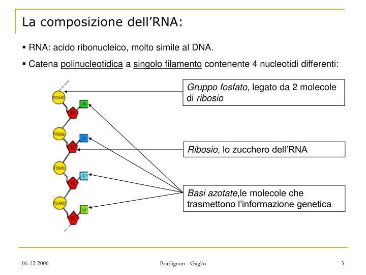 La composizione dell'RNA: