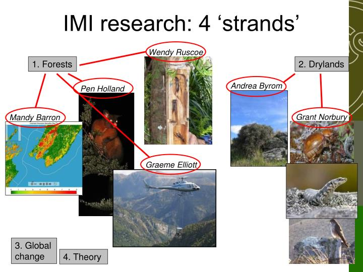 Imi research 4 strands
