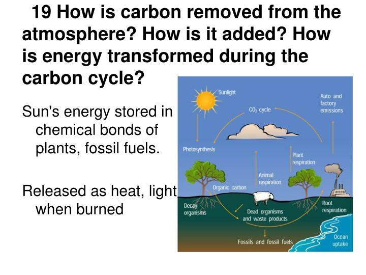 19 How is carbon removed from the atmosphere? How is it added? How is energy transformed during the carbon cycle?