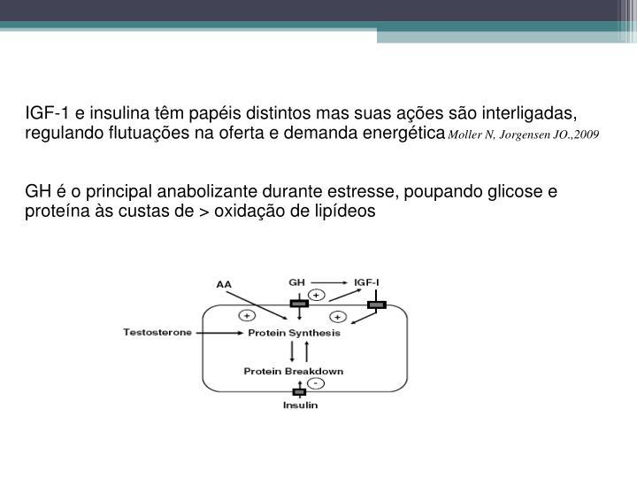 IGF-1 e insulina tm papis distintos mas suas aes so interligadas, regulando flutuaes na oferta e demanda energtica