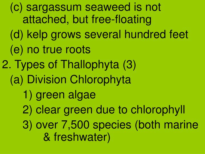 (c) sargassum seaweed is not attached, but free-floating