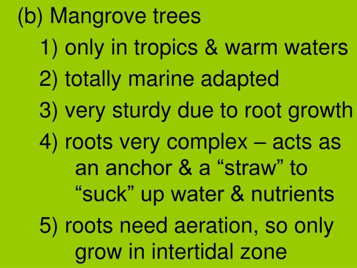 (b) Mangrove trees