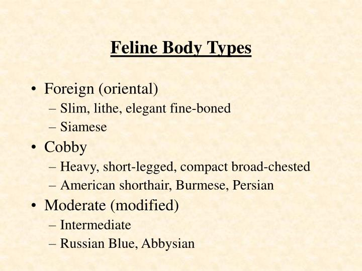 Feline Body Types