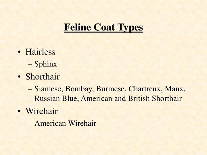 Feline Coat Types