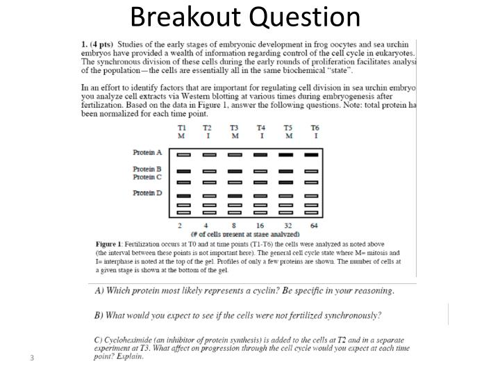 Breakout Question
