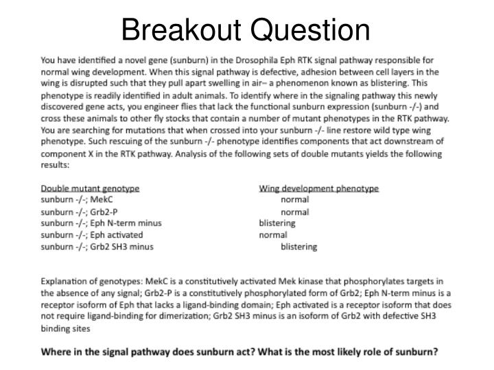 Breakout Question