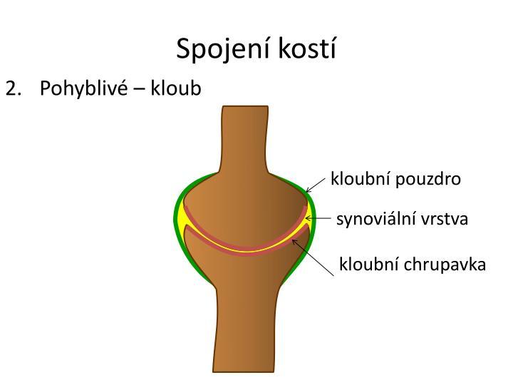 Spojení kostí