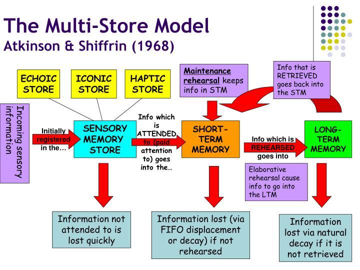 The Multi-Store Model