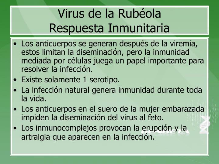 Virus de la Rubéola