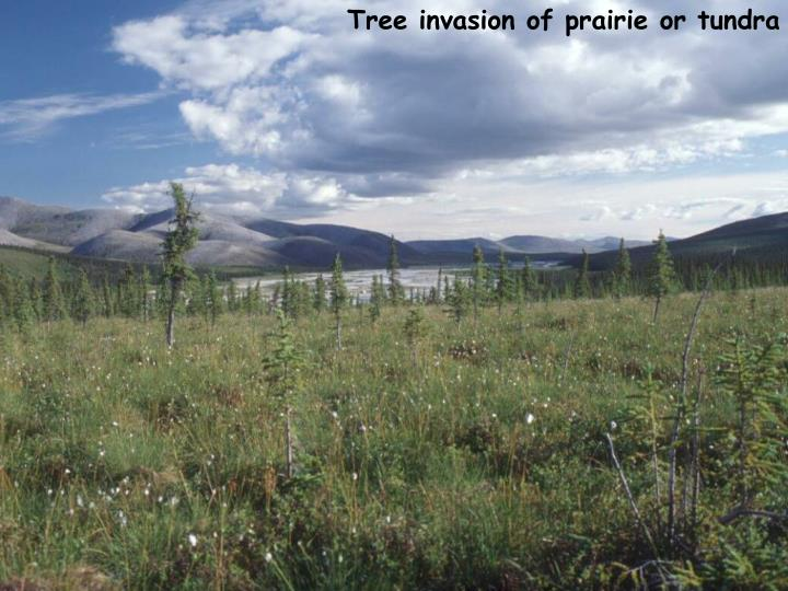 Tree invasion of prairie or tundra