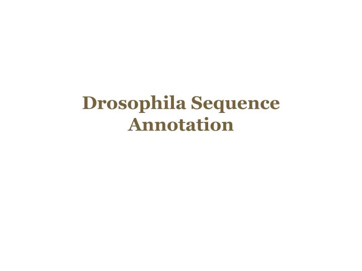 Drosophila Sequence Annotation