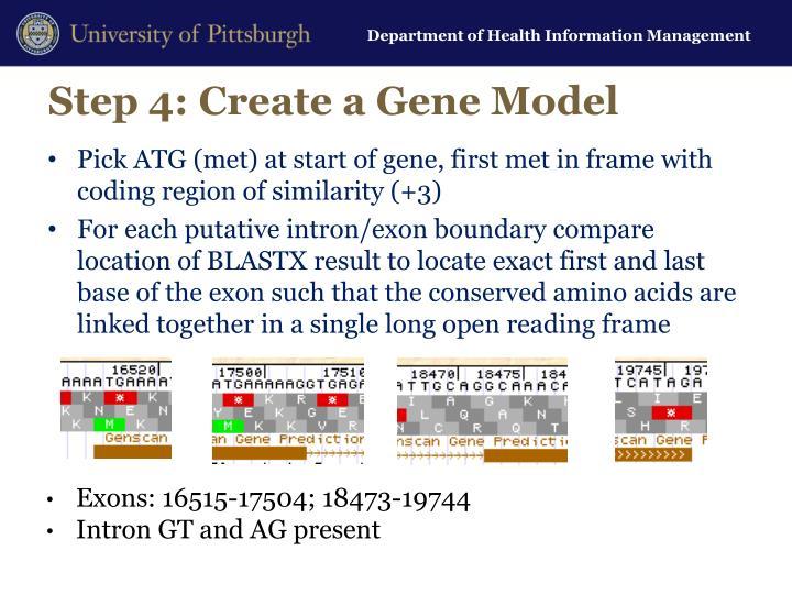 Step 4: Create a Gene Model
