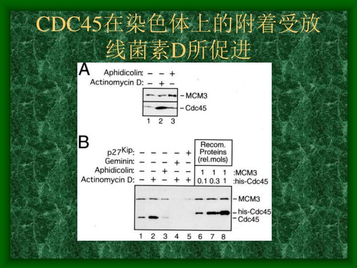 CDC45