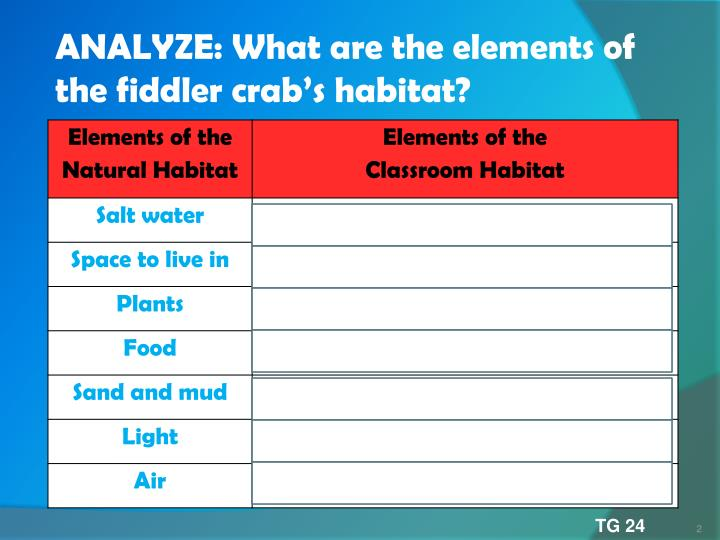 ANALYZE: What are the elements of the fiddler crab's habitat?