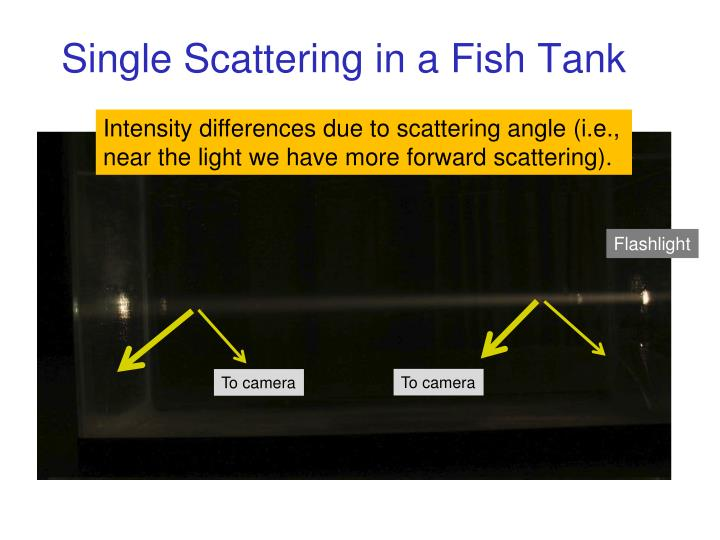 Single Scattering in a Fish Tank