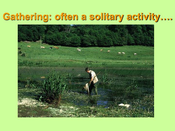 Gathering: often a solitary activity….