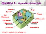 question 1 organelles of plant cells