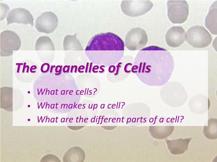 The organelles of cells