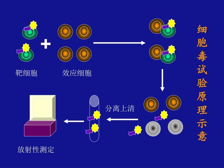 细胞毒试验原理示意