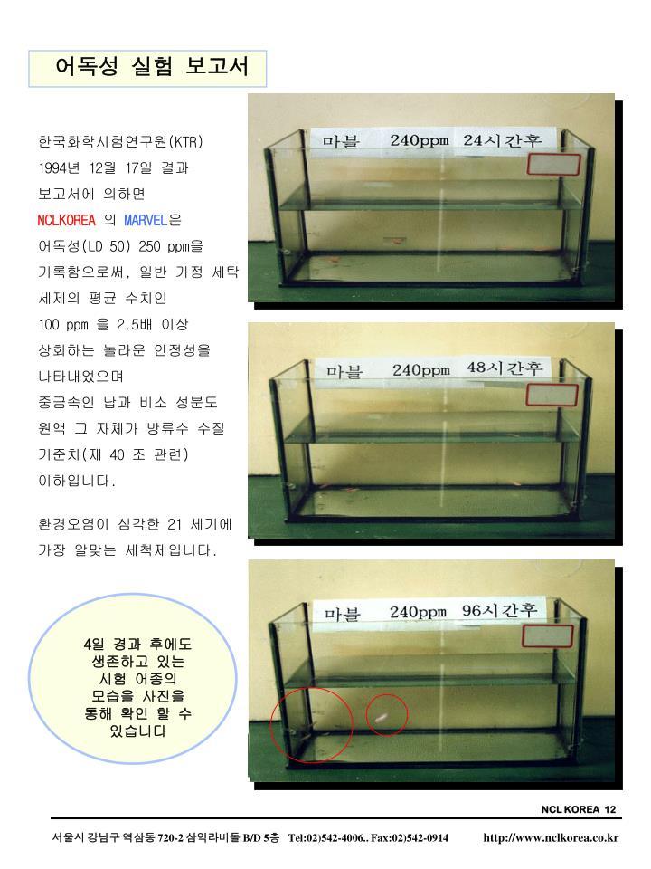 NCL KOREA  12