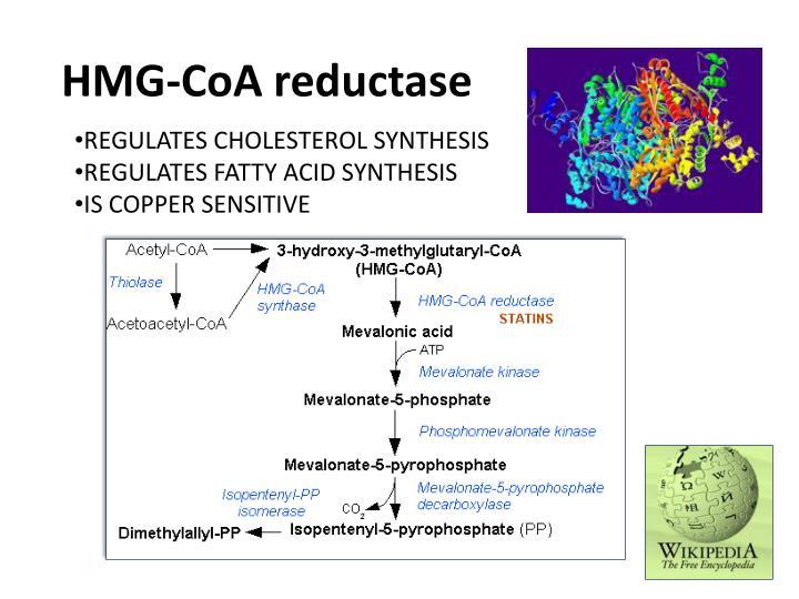 HMG-CoA reductase