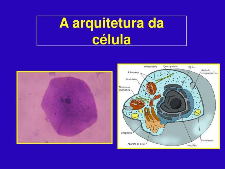 A arquitetura da célula