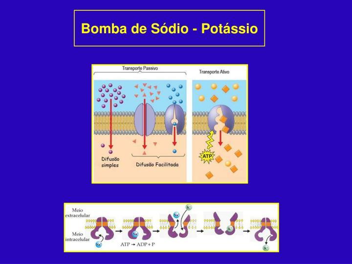 Bomba de Sódio - Potássio