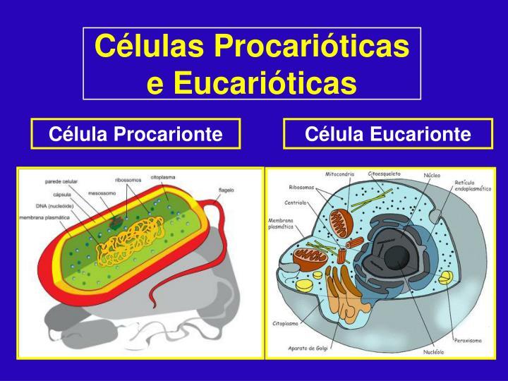 Células Procarióticas e Eucarióticas