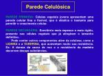 parede celul sica1