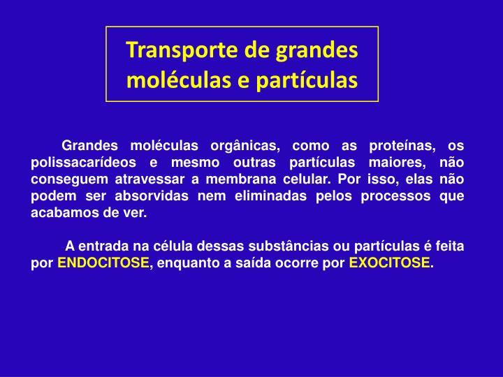 Transporte de grandes moléculas e partículas