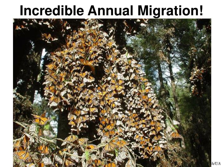 Incredible Annual Migration!