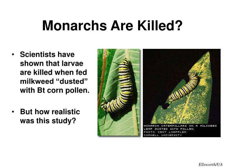 Monarchs Are Killed?