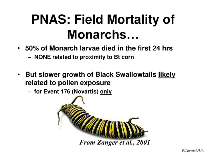 PNAS: Field Mortality of Monarchs…