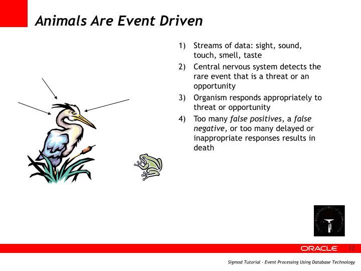 Animals Are Event Driven