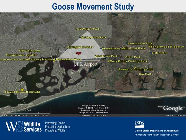 Goose Movement Study
