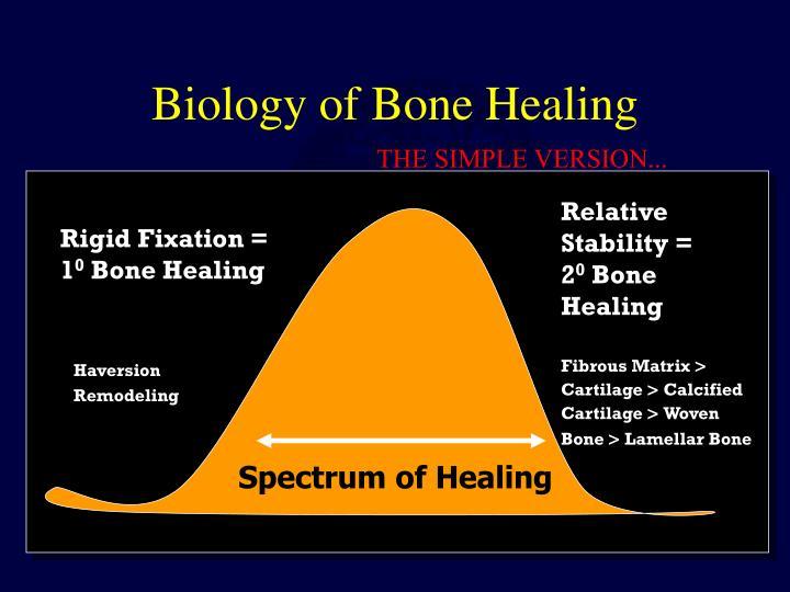 Biology of Bone Healing