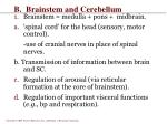b brainstem and cerebellum