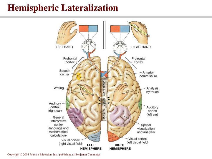 Hemispheric Lateralization