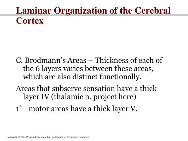 Laminar Organization of the Cerebral Cortex