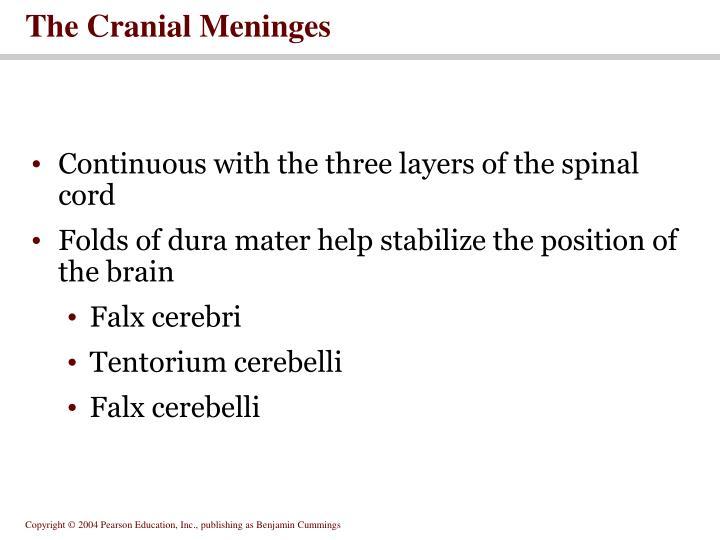 The Cranial Meninges