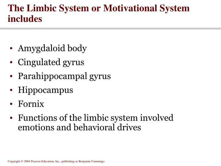 The Limbic System or Motivational System includes
