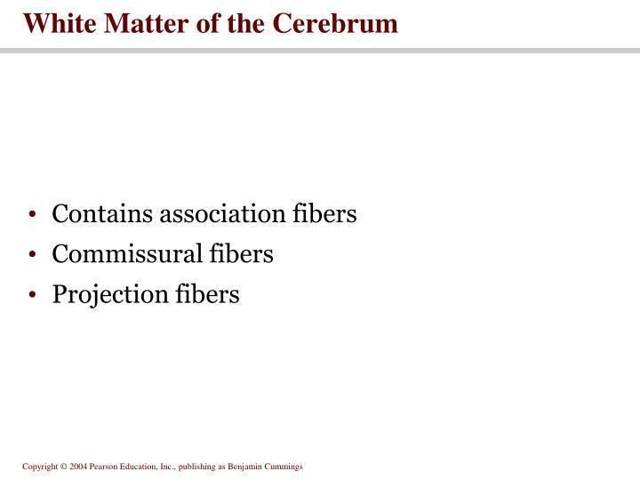 White Matter of the Cerebrum