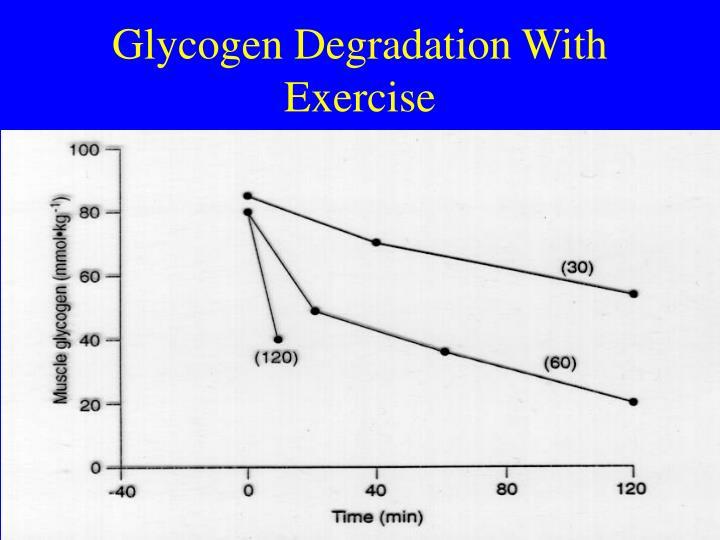 Glycogen Degradation With Exercise