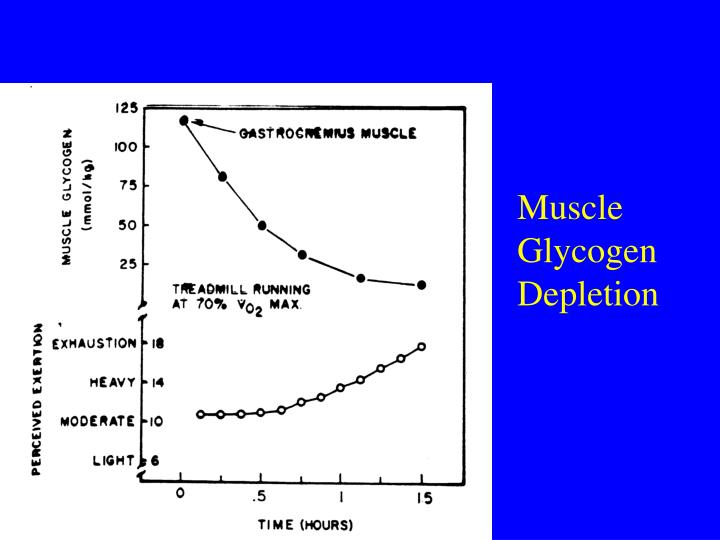 Muscle Glycogen Depletion