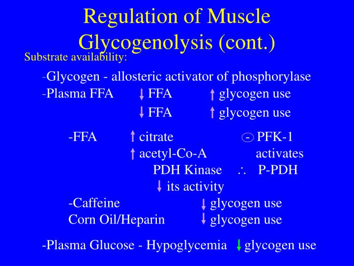 Regulation of Muscle Glycogenolysis (cont.)