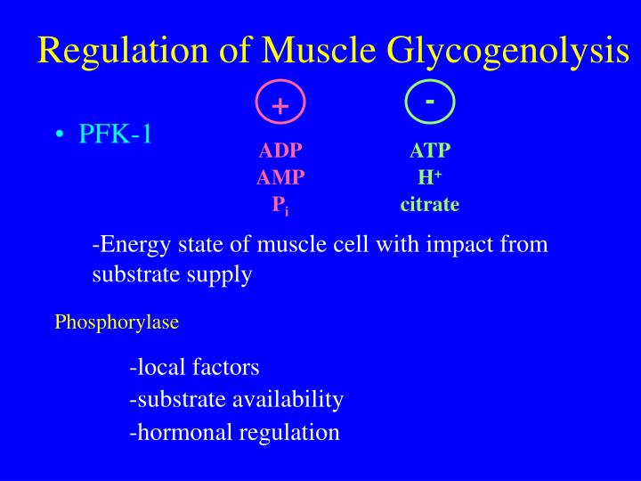 Regulation of Muscle Glycogenolysis