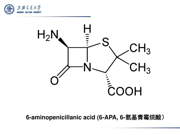6-aminopenicillanic acid (6-APA, 6-